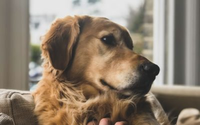 Should Employees be Allowed Bereavement Leave when a Pet Dies?
